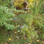 sculpture garden 1 h/